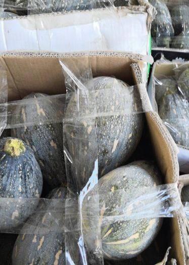 钦州 南瓜种子