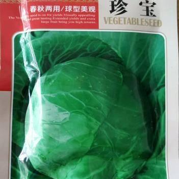绿甘蓝种子 郑研珍宝甘蓝种子 早熟水果味甘蓝种子春秋均可种植