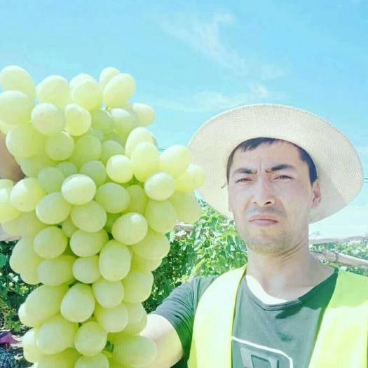 鄯善县 鲜无核白葡萄