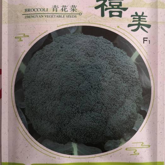 商丘夏邑县 郑研禧美青花菜,西兰花种子