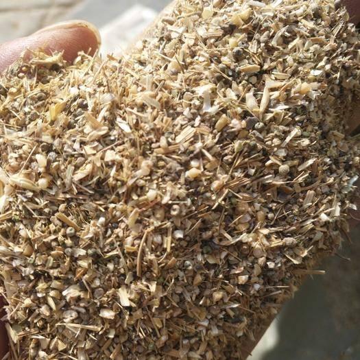聊城東昌府區碎小麥 質量好價格便宜