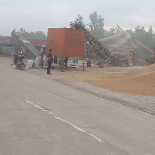 公安縣 預售小麥,水份14下,容重760左右,價格1.1元斤,量大