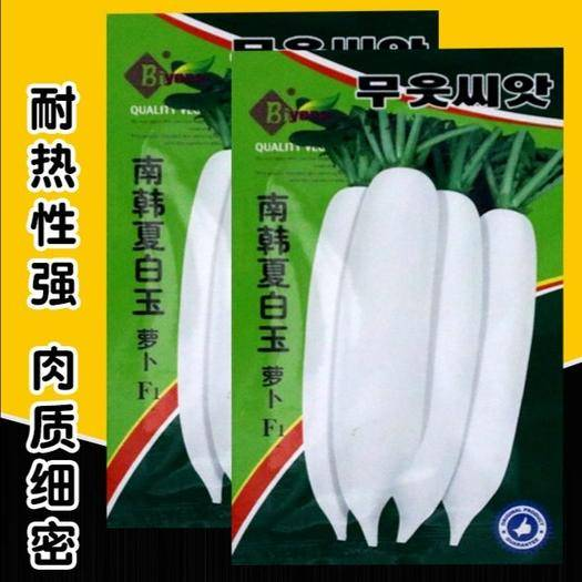 漳州南靖县 白萝卜种子 大田菜园高产易种脆嫩洁白肉质细腻萝卜种子