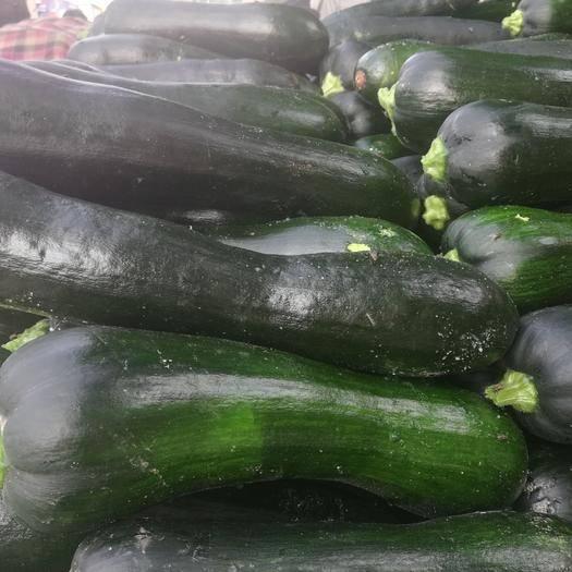 博爱县小果南瓜 精品小瓜现在便宜了快来采购吧。