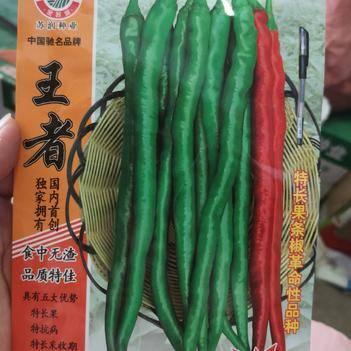 线椒种子 特长果 特抗病 特长采收期特高产特好卖1000粒