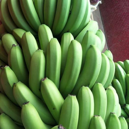 红河蒙自市 香蕉