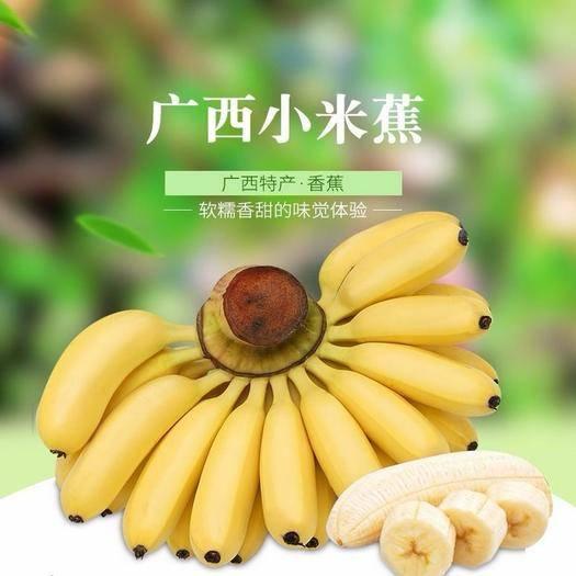 南宁 限时特价!广西小米蕉香蕉水果 批发10斤/5斤当季时令新鲜