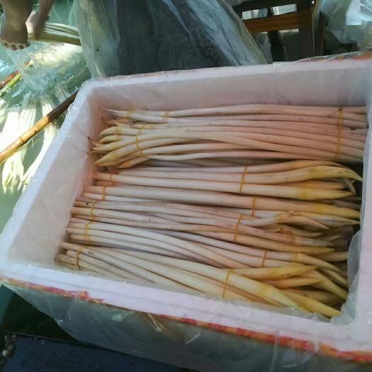 仪征市白玉簪藕带 要货的老板,提前预定,日产量有限