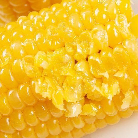 双鸭山速冻糯玉米 黑龙江糯玉米真空包装有机甜糯新鲜玉米粘糯玉米棒营养早餐