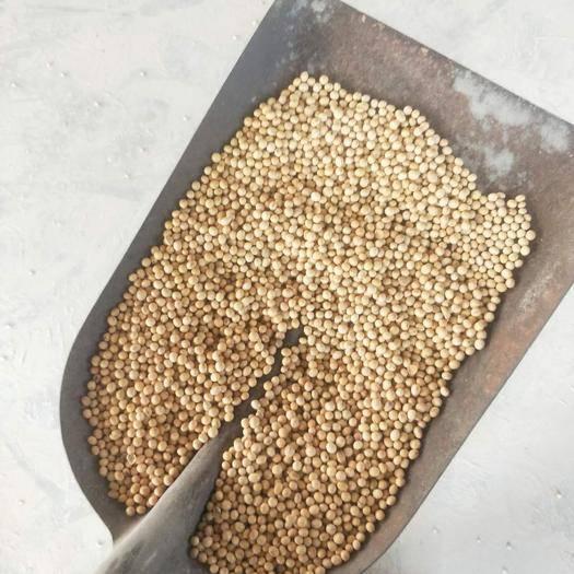 霍邱县进口大豆 生大豆 1等品