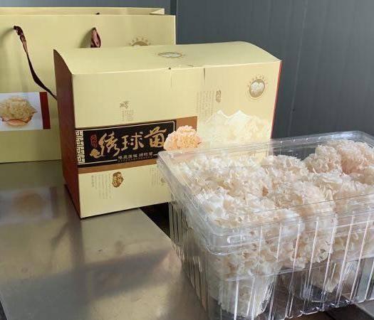 福州闽侯县 厂家直销有机绣球菌,营养健康,美容,抗肿及抗氧化、抗病毒等