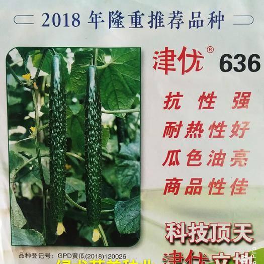 南靖县油亮密刺黄瓜种子 【主推】露地王者密刺、特耐热耐湿、特抗病、特高产、墨绿油亮。