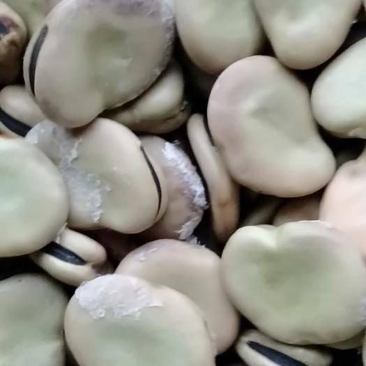 如东县蚕豆种子 白皮香蕉蚕豆种,大白皮蚕豆种,日本寸豆种,红皮香蕉豆,白嘴豆