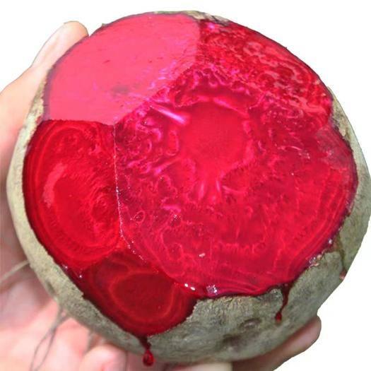 徐州泉山区 甜菜根新鲜现挖5斤甜菜头紫菜头红甜菜农家产品蔬菜红根菜头