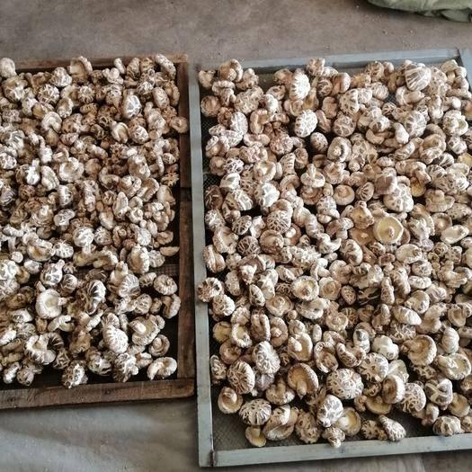 隨州隨縣花菇 出口質量精品好菇自種植不燒煤規格從3到8精分選