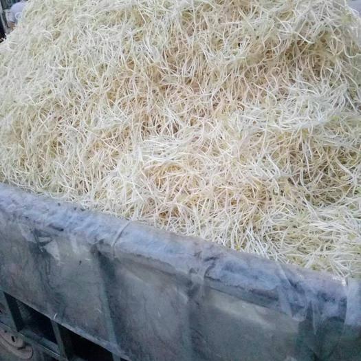 湖北省孝感市孝南区 绿色生产。豆芽批发。 全国各地批发商可合作当地生产