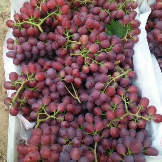 单县红芭拉蒂 1.5- 2斤 5%以下 1次果