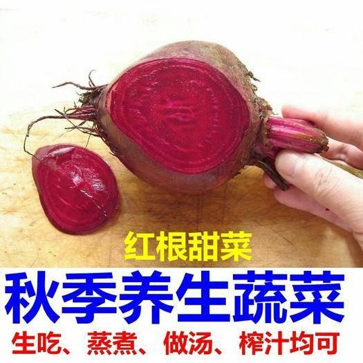 唐山迁安市甜菜种子 红甜菜根种子6月到8月播种期催芽播种大约500粒左右一袋包邮