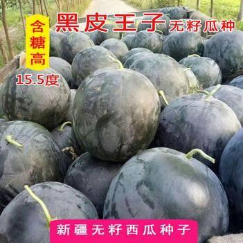 黑皮王子无籽西瓜种子 纯黑皮红瓤皮薄 日本进口亲本培育 正