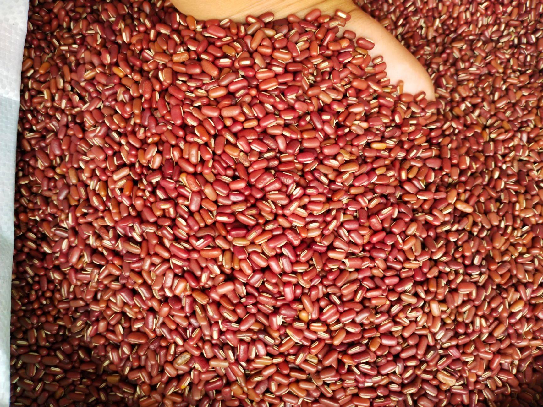 精品赤小豆紅豆批發