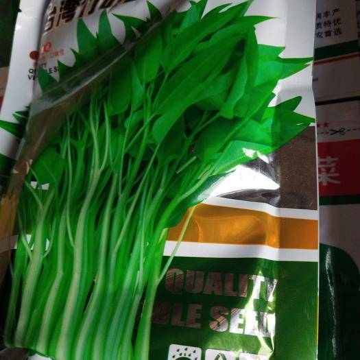 宿迁沭阳县空心菜种子 台湾竹叶空心菜早熟抗病高产农产耐热耐口感脆嫩