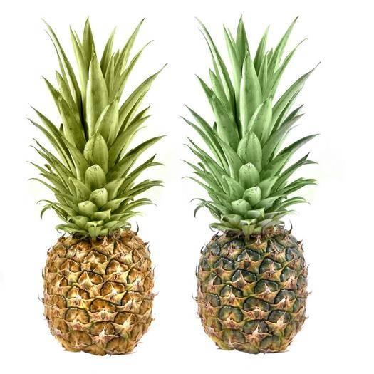 钦州灵山县皇后菠萝苗 可盆栽可地栽,可以枞生。百分之百成活,百分之百结果。