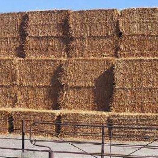 宿州灵璧县不限品种 皖北小麦桔杆
