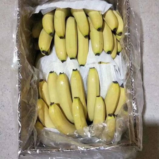 邯郸丛台区河口香蕉 云南蕉,净重17-18斤,保证不硬心,不黑心