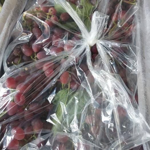 聊城红艳天 1.5- 2斤 5%以下 1次果
