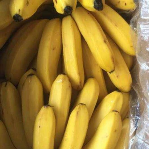 红河蒙自市 云南河口香蕉