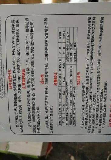 商丘夏邑县 紫佳人紫油菜种子丰产稳产