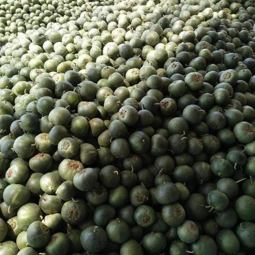 石家庄新乐市绿宝瓜 我这现在的甜瓜特便宜,白瓜几毛钱了,绿的一块多点。想收的联系