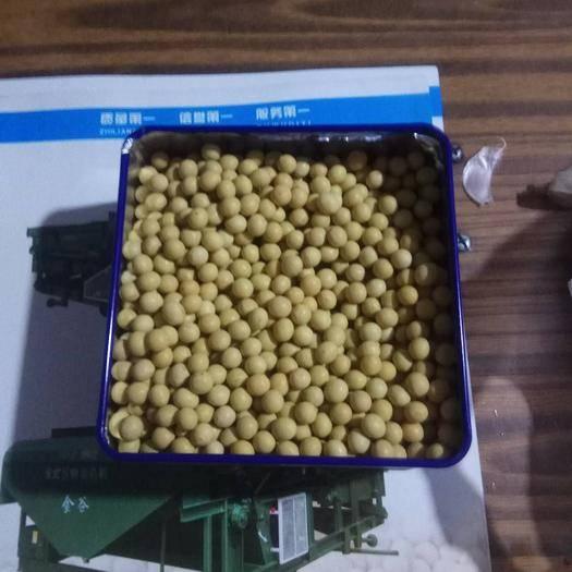 黑河嫩江县 '大豆大颗粒