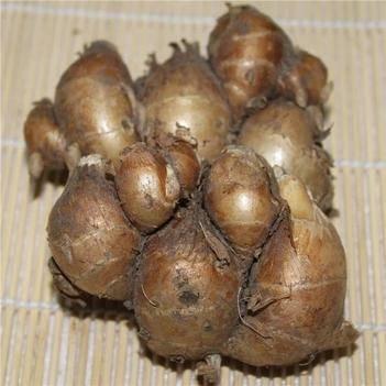 海南沙姜清香微辣调味可做沙姜白斩鸡沙姜猪脚等作用