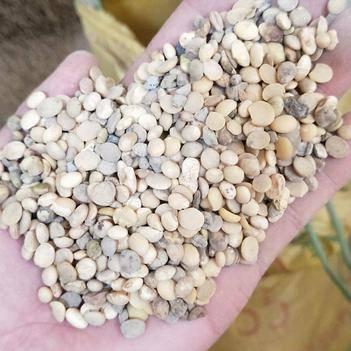 黄豆瓣 豆瓣,纯破半边豆,无灰尘,过比重筛选出来