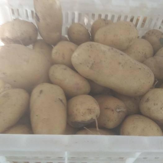 山东省青岛市平度市荚豆