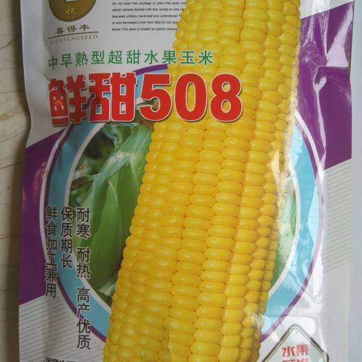 鄭州惠濟區 中早熟超甜水果玉米種子 穗大 一咬爆漿 脆甜多汁