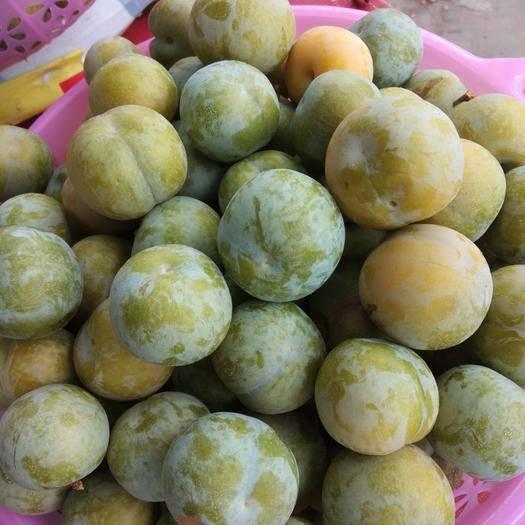 会东县蜜李 蜂甜李,又甜又翠,还有蜂蜜的香味,让人吃了回味无穷,