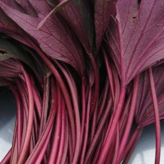 南充 草屯紫薯葉,臺灣珍稀品種,紅薯葉,番薯葉,甘薯葉種苗