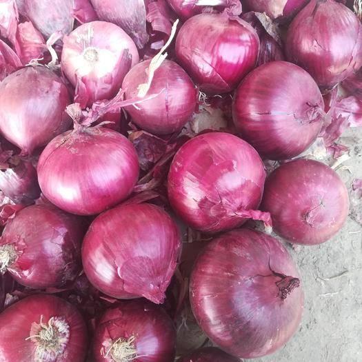 济宁金乡县 精品红洋葱,各种规格,各种包装,分拣加工,常年供应,量大从优