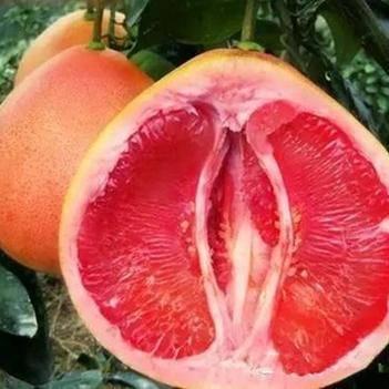 三红蜜柚苗,皮薄肉厚无核,果型好看果肉甜,产量高