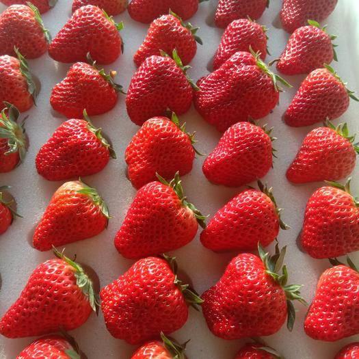 東港市 丹東久久草莓,產地直供,十一月上市