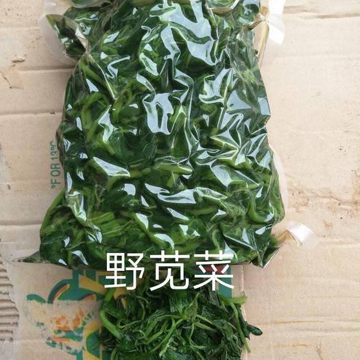 邯鄲大名縣青莧菜 15-20cm 鮮綠