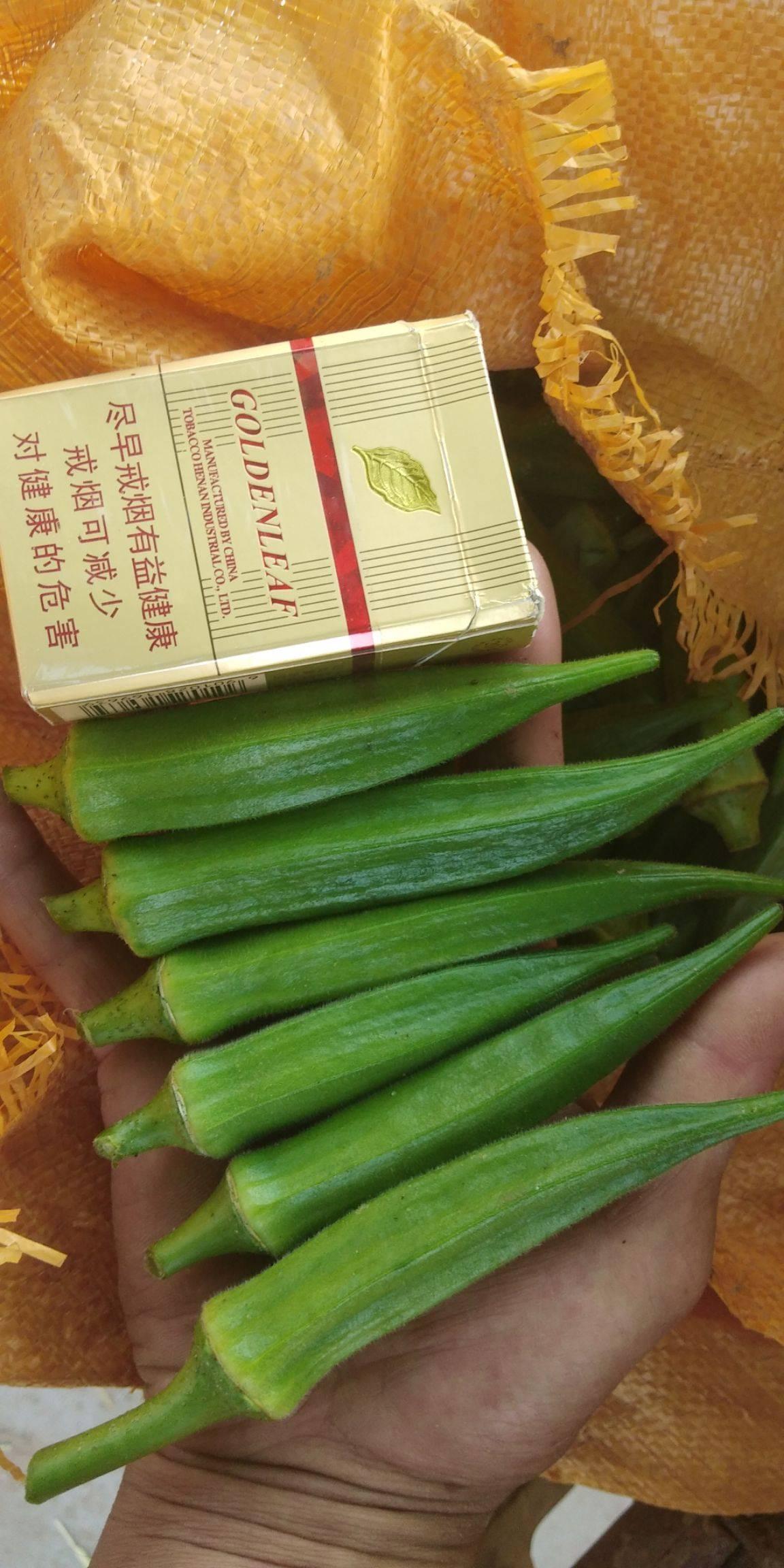 水果秋葵 10 - 12cm