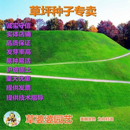 宿迁沭阳县 护坡草种子四季青草坪种子新种了包邮