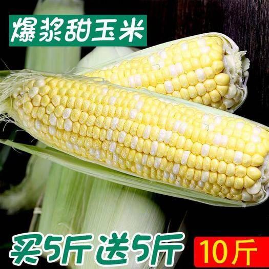 昆明 云南新鲜水果玉米10斤新鲜当季现货玉米棒甜玉米包邮