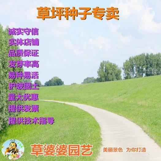 宿迁沭阳县 早熟禾种子新种了包邮