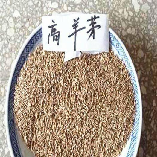 宿迁沭阳县高羊茅种子 高羊茅草坪种子,肯塔基,蓝标,白标都有现货。