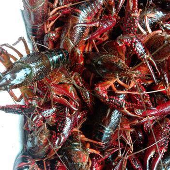 洪湖清水小龙虾