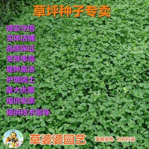 宿迁沭阳县 三叶草种子白三叶种子红三叶种子